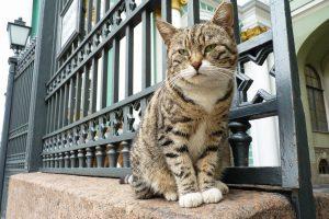 Una gatta dell'Ermitage al lavoro (con la stessa mansione da secoli: caccia ai topi)