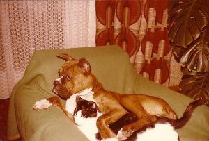 Witosh (cane) e Felix (gatto)